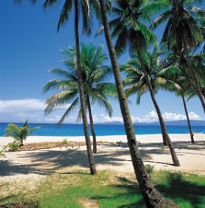 Palm trees by the beach with coconuts in the sand.
